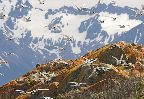 Beagle Channel, Argentina, wildlife and sights
